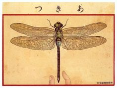 "from ""Art Of The Japanese Postcard"""