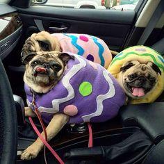 Uggy Wuggy...! 3 Snuggy Piggies !!!