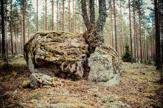 PUNASSUO, RYSSÄNUUNI JA PUUN HALKAISEMA SIIRTOLOHKARE Perniön Punassuolta löytyvät vanhan hiilimiilun rauniot.  http://www.naejakoe.fi/luontojaulkoilu/punassuo-ryssanuuni-ja-puun-halkaisema-siirtolohkare/ #salo #visitsalo #visitfinland #matkailu #ulkoilu #retkeily #natureaddict #amazingearthofficial #ourplanetdaily #Bestvacation #theglobalwanderer #theglobalwanderer #travelawesome #discoverearth