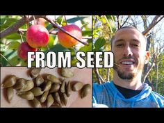 EASY WAY How to Grow an Apple Tree from Seed - YouTube