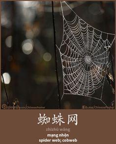 蜘蛛網 - zhīzhū wǎng - mạng nhện - cobweb