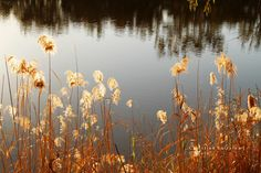 Murray River. Mildura NSW.