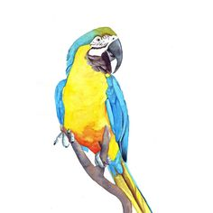 Macaw Painting Parrot bird print of watercolor by Splodgepodge, $20.00
