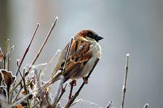 Free Photo: Sparrow, Bird, Animal, Nature - Free Image on Pixabay - 50346