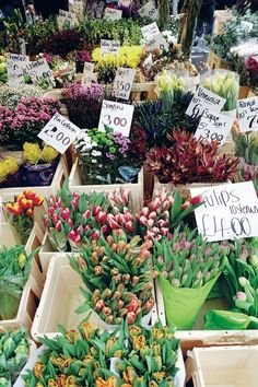 You get a tulip! And you get a tulip! Just a part of the selection at Columbia Road; photo courtesy of Insider London.