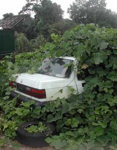 Really Green Vehicles: 7 Amazing Overgrown Parked Cars | WebEcoist