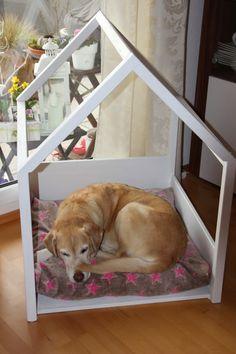 Hallo Ihr Lieben,   es tut mir leid, das ich mich weder zum RUMS noch zum Flowerday melden konnte und kann.   Unserm Hund geht es leider n...