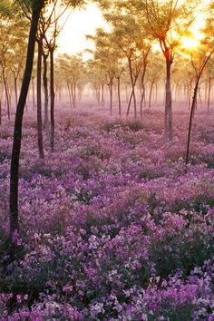 Misty morning - Sea of Flowers - from expressions-of nature Wild Flower Meadow, Wild Flowers, Beautiful World, Beautiful Places, Beautiful Scenery, Champs, All Nature, Nature Tree, Amazing Nature