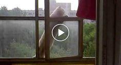 Gato Sobe 6 Andares Para Entrar Em Casa http://www.funco.biz/gato-sobe-6-andares-entrar-casa/