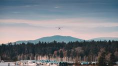 Harbour Landing - Incoming seaplane yesterday morning in Vancouver Harbour, as seen from Canada Place.