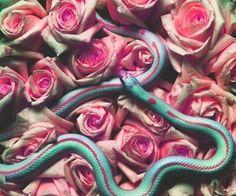 Dina rababa'a | via Tumblr