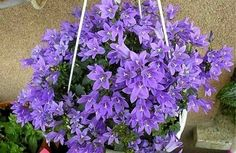 Любое растение время от времени нуждается в правильной подкормке. Особенно это актуально в сложные периоды жизни цветка. Например, после пересадки, если растение было ослаблено вредителями или каким-либо заболеванием, ну и, конечно, в вегетативный период, период цветения.    Одной из самых эффек