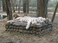Bannerghatta National Park in Karnataka, India