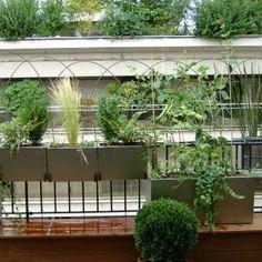 Un balcon où la nature règne en maître