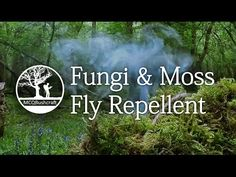 Bushcraft Fire Lighting: Fly Repellent - YouTube