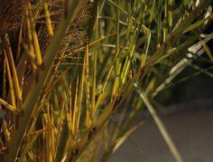 Bits of summer sunlight; palm tree