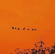 Birds on a wire, orange background Orange Aesthetic, Rainbow Aesthetic, Aesthetic Colors, Aesthetic Pictures, Aesthetic Grunge, Aesthetic Makeup, Orange You Glad, Orange Is The New, Orange Pastel