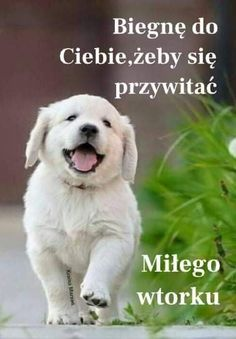 Good Night, Good Morning, Labrador Retriever, Happy Birthday, Pictures, Animals, Nighty Night, Buen Dia, Labrador Retrievers