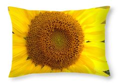 This image, SUNflower, can be purchased via my website: http://fineartamerica.com/products/sunflower-cheryl-williver-throw-pillow-20-14.html  There are other sizes available...and lots of other images, too! Create your own pillow garden :)