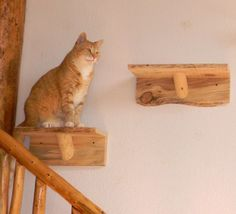 I like the more artistic look of these, and I would carpet them on top. (Wooden Cat Shelves Steps Shelf Platform Perch | eBay)