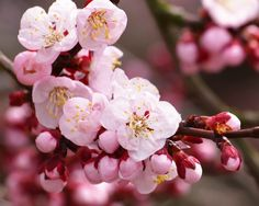 Download Wallpaper 1280x1024 Branch, Plant, Petals 1280x1024 HD Background
