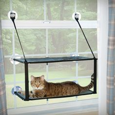 Look what I found on Wayfair!, $44.99-kitty-sill, holds up to 100 lbs with suction cup. Has good reviews. Good 4 apt living -could b me in San Diego in 2 mos...yikes!!!