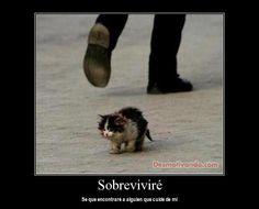 animales-desmotivaciones
