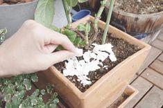 コーヒーかすや卵の殻が肥料として、ガーデニングにいいなんて噂も耳にしますが実際のところはどうなのでしょうか。 … Plants, Plant, Planets
