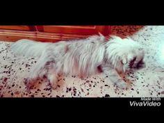 Il gatto Romeo e la pulizia quotidiana - YouTube