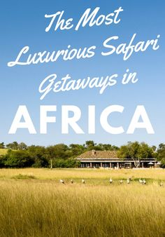 10 safari getaways that top the rest