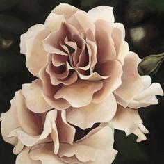 Apricot rose limited edition art print by margaret petchell Rose Art, Succulents, Aesthetics, My Arts, Peach, Interiors, Magazine, Art Prints, Garden