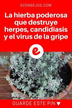 Tomillo recetas | La hierba poderosa que destruye herpes, candidiasis y el virus de la gripe  | ¿Usted conoce ésta planta? Ella es muy poderosa. Sepa como usarla!