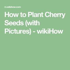How to Plant Cherry Seeds (with Pictures) - wikiHow