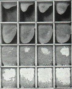 Honey Comb Building Process