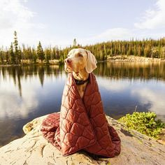 'Camping With Dogs' Instagram Account Is The Cutest Thing You'll See All Day - Condé Nast Traveler