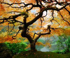 Japanese Garden, Portalnd - 5 Must See Attractions in Portland, Oregon