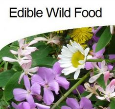 Learning How to Forage for Wild Edibles is Important