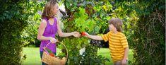 Simpler Gardening through Aeroponics | Tower Garden Vertical Garden