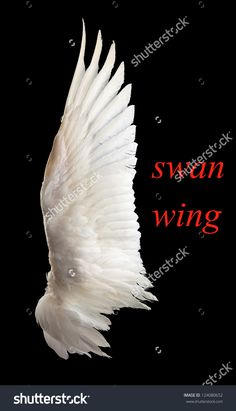 Swan wing shape - Google Search Swan Wings, Bird Wings, Wings Drawing, Gesture Drawing, Hermes Tattoo, Angel Aesthetic, Tattoo Project, Unicorn Art, Swan Lake