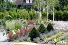 Ogród z lustrem - strona 275 - Forum ogrodnicze - Ogrodowisko