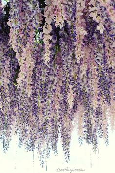 pinterest flowers wisteria | ... Wisteria Pictures, Photos, and Images for Facebook, Tumblr, Pinterest
