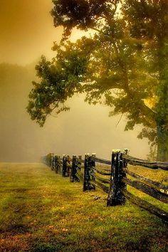#Horse Pasture