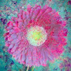 © ALAYA GADEH prints available at www.artistrising....