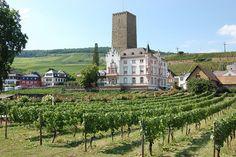 Vineyard on the Rhine River in Germany :-))))))