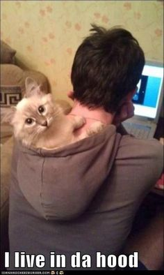 Anyone who owns a cat and a computer needs a good hoodie to save the never ending problem of where the cat sits. #CuteCats #FunnyCats #Cat #Kittens
