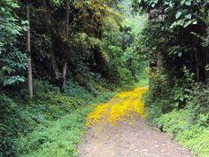 Caminata hacia el alto de los padres - octubre 2 de 2010  #senderismo #trekking #caminatas2010