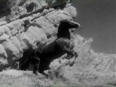 Image result for champion the wonder horse