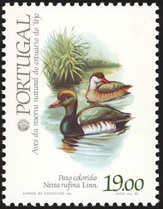 Red-crested Pochard stamps - mainly images - gallery format