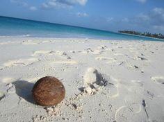 Divi Aruba All Inclusive: Druif Beach at Divi