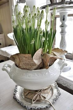Springs bulbs or flowers in an old Ironstone container with old book pages on a Silver tray